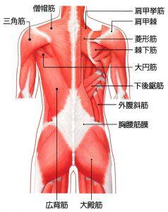 ビクラムヨガ 日和 筋肉