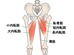 ビクラムヨガ 膝ロックは内転筋群も使う