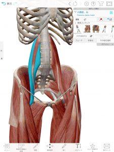 ビクラムヨガ日和 腸腰筋
